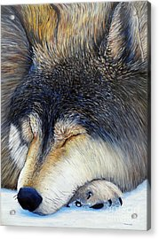 Wolf Dreams Acrylic Print by Brian  Commerford