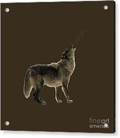 Wolf Howling Acrylic Print by Wildlife Fine Art