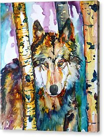Wolf In Aspen Acrylic Print