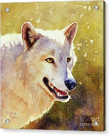 Wolf In Morning Light Acrylic Print