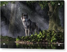 Wolf In The Forest Acrylic Print
