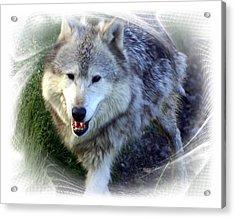 Wolf Acrylic Print by Marty Koch
