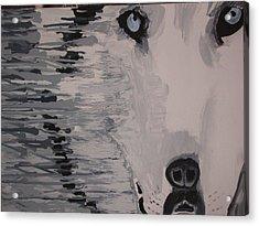 Wolf Mother Acrylic Print by Samuel Freedman