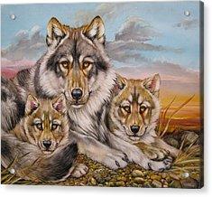 Wolf Nap Acrylic Print by Martin Katon