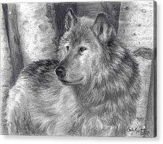 Wolf Number Six Acrylic Print