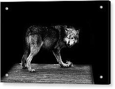 Wolf Portrait Acrylic Print by Martin Newman