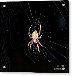 Wolf Spider Back View Acrylic Print by Photo Captures by Jeffery