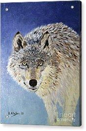 Wolf Study Acrylic Print