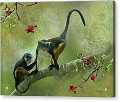 Wolf's Guenon Acrylic Print by Thanh Thuy Nguyen