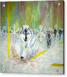 Wolves Approach Acrylic Print
