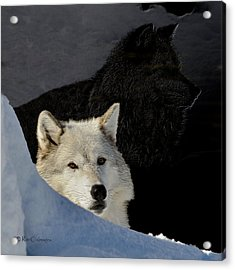 Acrylic Print featuring the digital art Wolves, Real And Surreal by Kae Cheatham