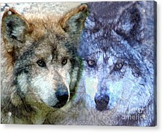 Acrylic Print featuring the digital art Wolves by Tom Romeo