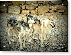 wolves XI Acrylic Print