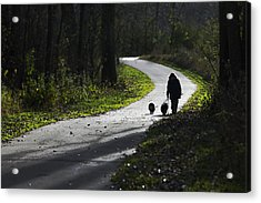 Woman And Border Collies Acrylic Print