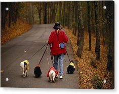 Woman Walks Her Army Of Dogs Dressed Acrylic Print by Raymond Gehman
