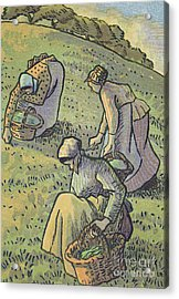Women Gathering Mushrooms Acrylic Print by Camille Pissarro