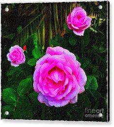 Wonder Of Nature Acrylic Print by Blair Stuart