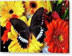 Wonderful Black Butterfly Acrylic Print