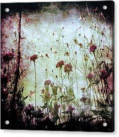 Wonderland Acrylic Print by Trish Mistric