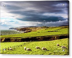 Acrylic Print featuring the photograph Wonders Of Thrumster by Anthony Baatz