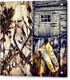 Wood Acrylic Print by Bob Berwyn
