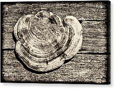 Acrylic Print featuring the photograph Wood Decay Fungi, Nagzira, 2011 by Hitendra SINKAR