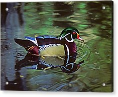 Acrylic Print featuring the photograph Wood Duck by Marie Hicks