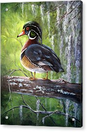 Wood Duck Acrylic Print by Mary McCullah