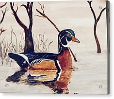 Wood Duck No. 2 Acrylic Print