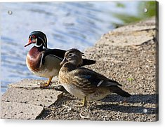 Wood Duck Pair By The Lake Acrylic Print by David Gn