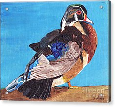 Acrylic Print featuring the painting Wood Duck by Rodney Campbell