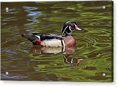 Acrylic Print featuring the photograph Wood Duck by Sandy Keeton