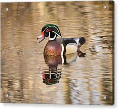Wood Duck With Reflection Acrylic Print