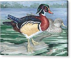 Wood Ducks Acrylic Print by Paul Brent