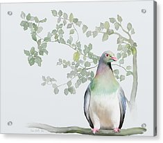 Acrylic Print featuring the painting Wood Pigeon by Ivana Westin
