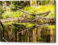 Wood Reflections Acrylic Print by Brian Williamson