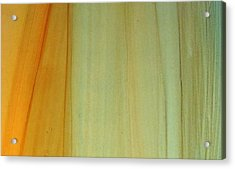 Wood Stain Acrylic Print