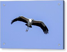 Acrylic Print featuring the photograph Wood Stork by Gary Wightman