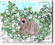 Woodchuck Chuck Acrylic Print by Susie Morrison