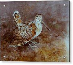 Woodcock Acrylic Print