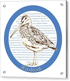 Woodcock Acrylic Print by Greg Joens