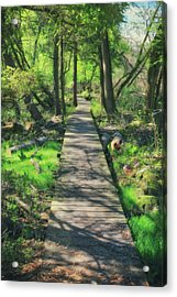 Wooded Path - Spring At Retzer Nature Center Acrylic Print by Jennifer Rondinelli Reilly - Fine Art Photography