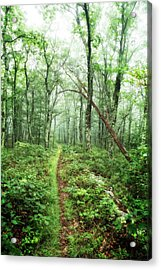 Acrylic Print featuring the photograph Wooded Trail by Alan Raasch