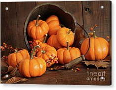 Wooden Bucket Filled With Tiny Pumpkins Acrylic Print by Sandra Cunningham