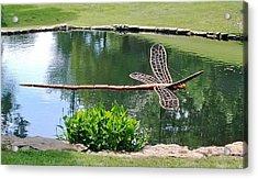 Wooden Dragonfly  Acrylic Print