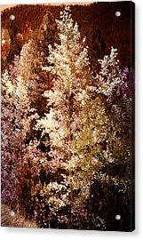 Woodland Beauty Acrylic Print by Joseph Frank Baraba