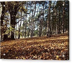 Woodland Carpet Acrylic Print
