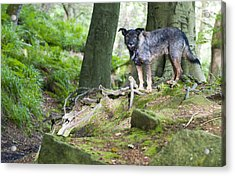 Woodland Dog Acrylic Print