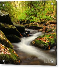 Woodland Fantasies Acrylic Print by Darren Fisher