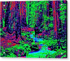 Woodland Forest D3 Acrylic Print by Modified Image